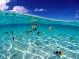 Интересные факты об океанах Интересные факты из жизни Тихий океан