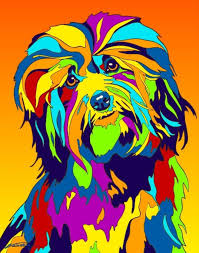 Small Picture 72 best Havanese images on Pinterest Havanese puppies Photo