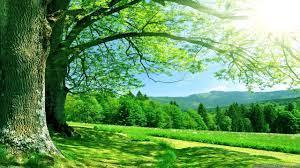 green, Nautre, Tree, Sky, Forest, Natur ...