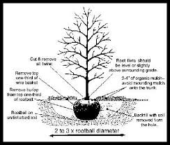 similiar sapling tree diagram keywords diagram of forest diagram circuit and schematic wiring diagrams for