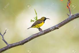 A Small Olive Bird Sits On A Branch And Looks Into The Distance Stock  Photo, Picture And Royalty Free Image. Image 89912763.