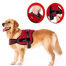 The 50 Best No Pull Dog Harnesses Of 2019 Pet Life Today