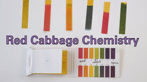 Bicarbonate Indicator Colour Chart Red Cabbage Chemistry Activity Teachengineering