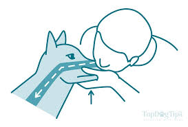 How To Do Cpr On A Dog The Full Guide For Beginners