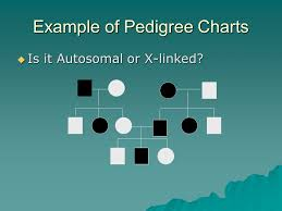 Pedigree Charts The Family Tree Of Genetics Ppt Download