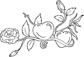 Rose Coloring Pages Flower Sheets Pdf Colouring Of A Print Download