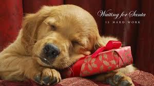 Cute Dog Christmas Desktop Wallpapers ...