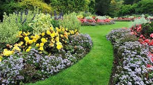 how to plant bedding plants