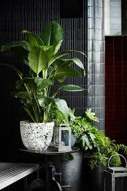 office pot plants. beresford hotel bar by kerry phelan design office sydney store pot plants