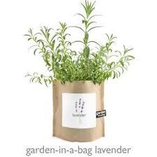 garden in a bag. Heirloom Lavender Garden-in-a-Bag Garden In A Bag D
