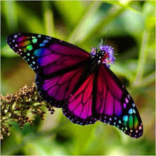 real beautiful colorful butterflies. Beautiful Real Real Blue Butterflies On Flowers  Google Search Inside Real Beautiful Colorful Butterflies Pinterest