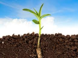 Image result for Soil and environmental science