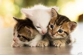 نتيجة بحث الصور عن اجمل صور قطط