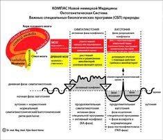 Scientific Chart Of German New Medicine 65 Best Metaphysical Illness Images In 2019 Types Of