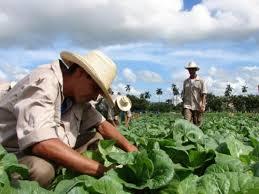 FAO incrementa apoyo a productores cubanos