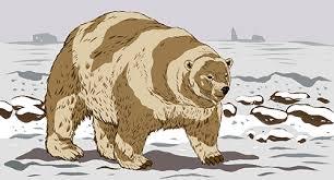 grolar bear size nautilus liger