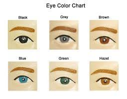 Baby Hair Color Predictor New Eye And Hair Color Genetics