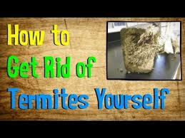 How to Get Rid of Termites. Out of all the countless insects and other  pests that disturb homeowners everywhere, few are more dangerous than the  termite.