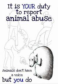 best stop animal cruelty ideas animal testing graphic illustration but people need to stop closing their eyes to animal cruelty and abuse