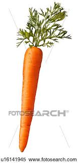 single carrot.  Single Single Carrot On White  Non Exclusive On A