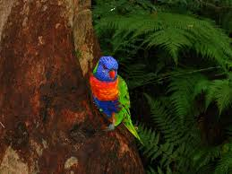 Image result for beautiful photos of the rainforest