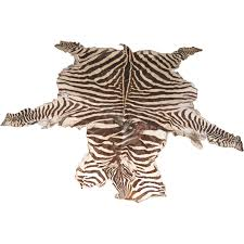 exciting zebra skin rug ideas for beautify your interior