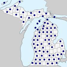 Danthonia spicata - Michigan Flora