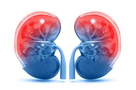 Image result for किडनी रोग