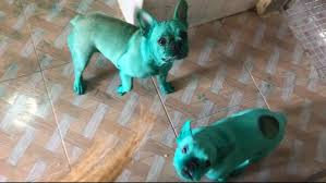 Cute Dogs Get Into Kitchen Cupboard And Dye Themselves Green ...