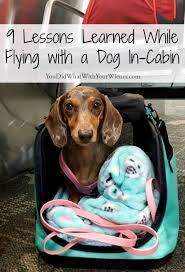 flying with a dog in cabin