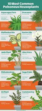 36 poisonous plants ideas poisonous