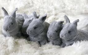 Tapety królik zwierzę