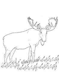 Small Picture Caribou 7 Animals Printable coloring pages