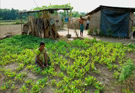food security in essay food security essay article speech  food security in essayphoto essay ratna has a choice impatient optimists there was no reason