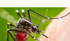 terminix houston tx. Simple Terminix Mosquito Throughout Terminix Houston Tx