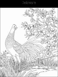 Small Picture 19 best Coloring Pages State Birds Flowers images on Pinterest