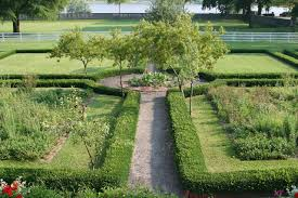 Image result for privet hedge