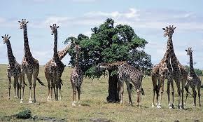 תוצאת תמונה עבור animals nature