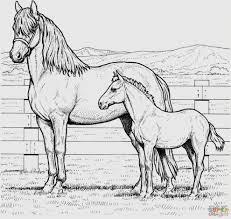 Più Adatto Per I Bambini Disegni Da Colorare E Stampare Di Cavalli