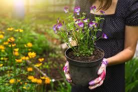 epsom salt gardening. Exellent Gardening Flower Pot In Hands Demonstrating Epsom Salt Uses The Garden   Vitacostcom And Gardening