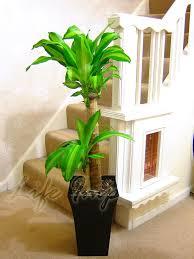 office pot plants. 1 Large Indoor Office House Tree Milano Gloss Pot Palm Dracaena Trees Plants