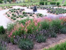 Small Picture Carolyn Robinson Garden Design