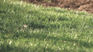 Lawn Care At The Home Depot