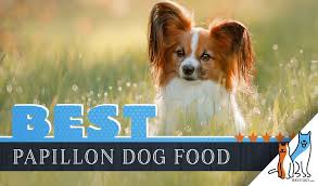 Papillon Growth Chart 6 Best Papillon Dog Food Plus Top Brands For Puppies Seniors