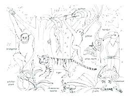 Jungle Coloring Pages Free Printable Animal Coloring Pages Free Cute