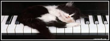 cute kittens sleeping on pianos.  Cute Sleeping Kitten On Piano Facebook Cover On Cute Kittens Pianos