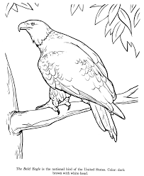 Small Picture Animal Drawings Coloring Pages Bald Eagle bird identification