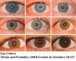 Baby Eye Color Possibility Chart Sandwalk The Genetics Of Eye Color