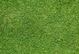 grass.  Grass Grass And L