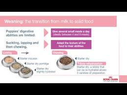Royal Canin Diet Chart Royal Canin Advice On Feeding Your Puppy